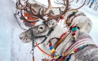 WRCアークティック事前情報:スウェーデンの代替として開催される極北のスノーラリー