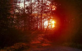 WRCフィンランド:ロバンペラ「夜のオイッティラは大変なチャレンジ」イベント前記者会見